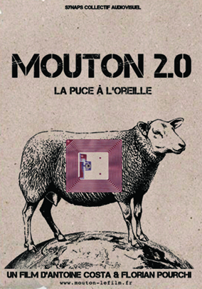 moutons2.jpg